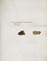 Lichenes Helvetici IX X 1833 028.jpg