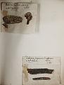 Lichenes Helvetici pars altera 010.jpg