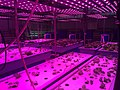 Light on Aquaponics.jpg