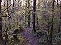 Little Death trail - panoramio (1).jpg