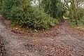 Littleham church path - geograph.org.uk - 1139482.jpg