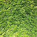 Living Wall - Free For Commercial Use - FFCU (27287157911).jpg