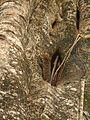 Lizard Tokay Gekko gecko IMG 0881 03.jpg