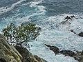 Lloret de Mar - panoramio (92).jpg