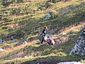 Locals foraging juniper berries and mushrooms Lille Malene hike near Nuuk Greenland.jpg