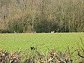 Lot of deer - geograph.org.uk - 331482.jpg