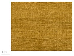 Lovoa trichilioides MHNT.BOT.2010.6.10.jpg