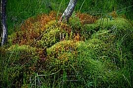 Lowland vegetation.jpg
