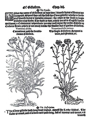 Henry Lyte (botanist) - A page on gillofers (gillyflowers, that is, carnations and pinks), from A niewe Herball by Henry Lyte, 1578.