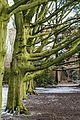 Münster, Park Sentmaring -- 2015 -- 01073.jpg