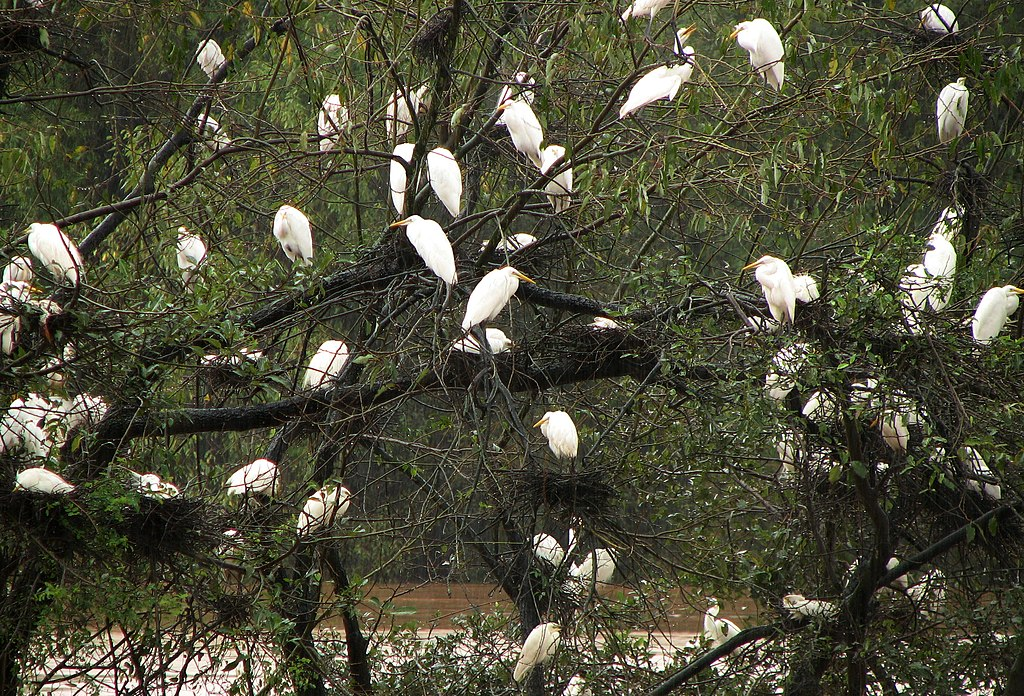 Mandagadde Bird Sanctuary (2869783736)