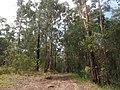 Marana Road - panoramio (1).jpg