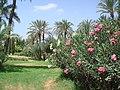 Marrakesh - 2008 - panoramio (73).jpg