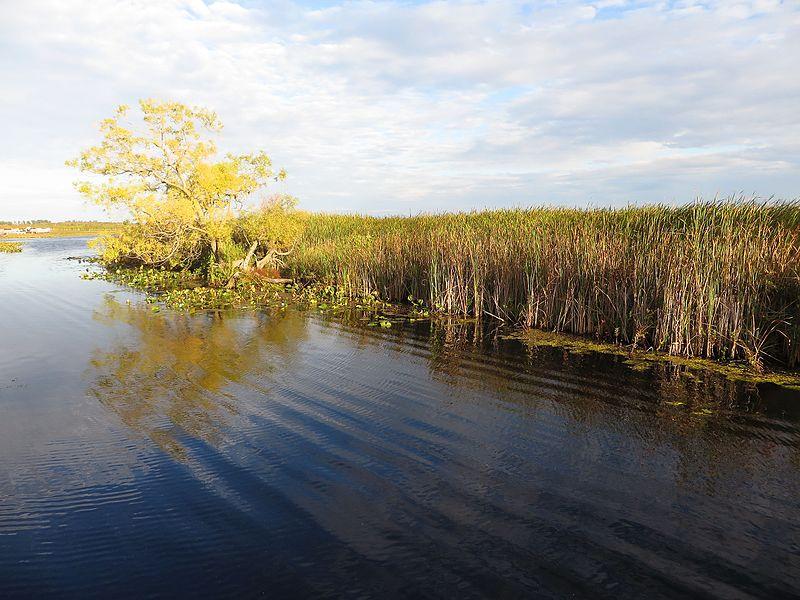 File:Marsh Boardwalk, Point Pelee National Park, Leamington, Ontario, Canada (21586420978).jpg