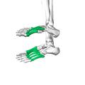 Metatarsal bones08.png