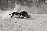 Military police work dog bite training 121107-A-BX842-035.jpg
