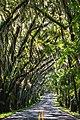 Miller Landing Road, Tallahassee, United States (Unsplash).jpg