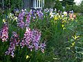 Mixed irises.JPG