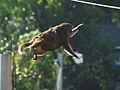 Monkey Leap.jpg