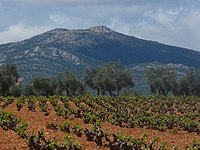Montes de Toledo con viñedo, desde Arenas de San Juan.JPG