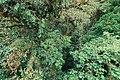 Monteverde Cloud Forest 01.jpg