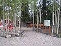 Moose at Denali Park Village.jpg