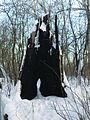 Morysin - zespół pałacowo-parkowy - spalone drzewo.jpg
