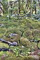 Mossy (8049427210).jpg