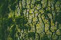 Mossy Tree Depth of Field (19972380938).jpg