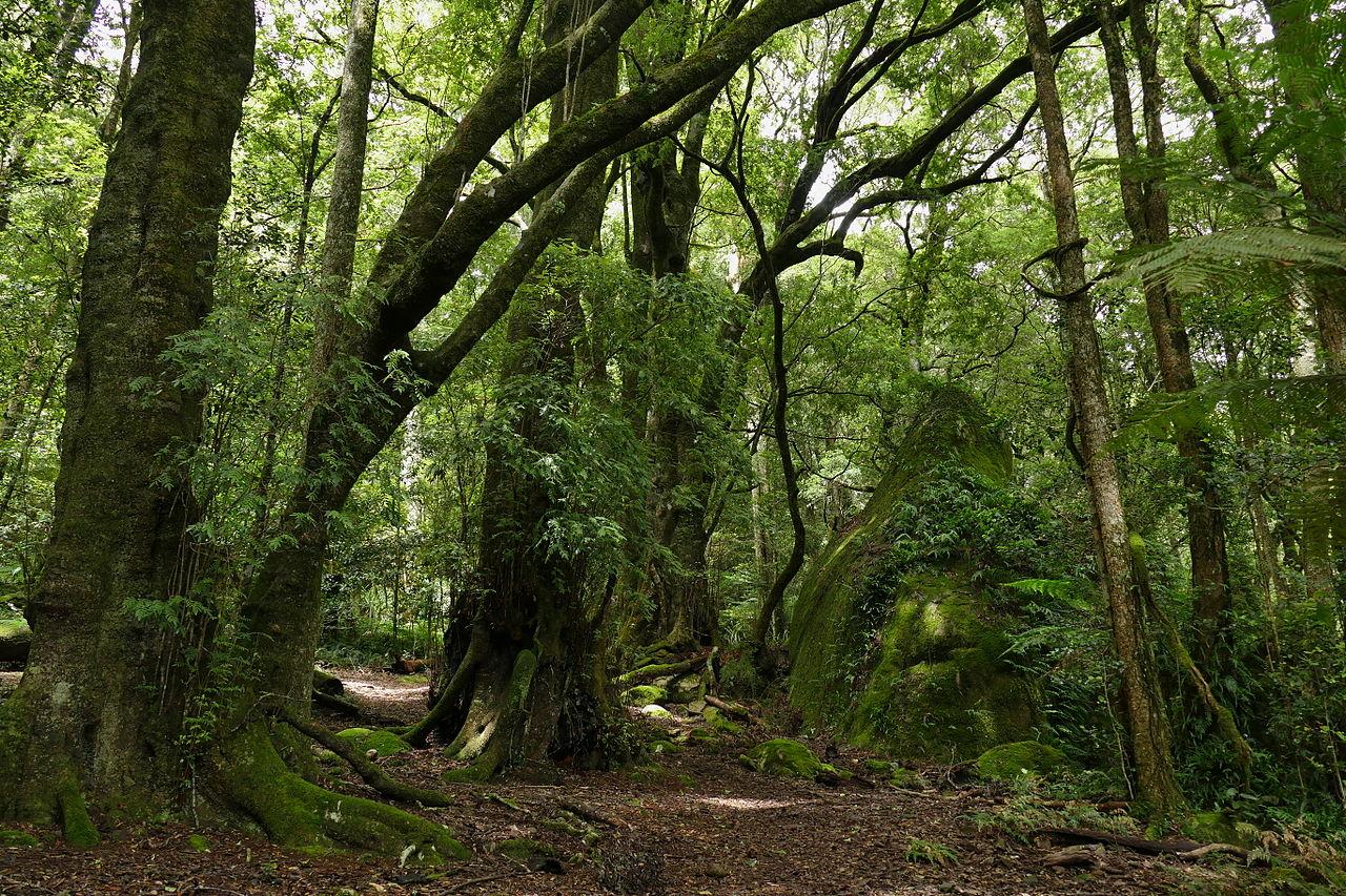 File:Mount Gulaga temperate rainforest-1.jpg - Wikimedia ...