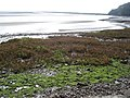 Mudflats at Laugharne - geograph.org.uk - 461212.jpg