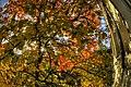 My little garden - panoramio - Tatiana Bashinskaya.jpg