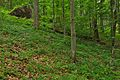 Národná prírodná rezervácia Stužica, Národný park Poloniny (03).jpg