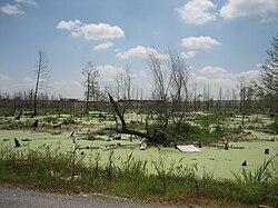 A l'Ouest de la Nouvelle Orléans, 6 mois après le passage de l'Ouragan Katrina