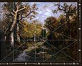 NVD-Forest-1.jpg