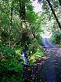 Nant Sylltyn, Beulah, upstream - geograph.org.uk - 967741.jpg