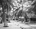Native village, Rongerik Island, 1947 (DONALDSON 122).jpeg