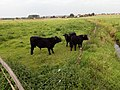 Naturdenkmal Bifurkation (Teilung von Hase und Else) Melle-Gesmold Datei 39.jpg