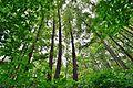 Nature Park 19.JPG