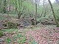 Naturschutzgebiet Eifgenbach.6.JPG
