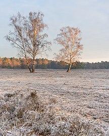 Naturschutzgebiet fischbeker heide 1.jpg