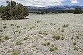 Near Fort Stanton - Flickr - aspidoscelis.jpg