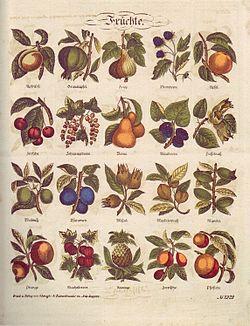 Liste des arbres fruitiers — Wikipédia