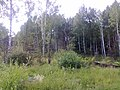 Nevyanskiy r-n, Sverdlovskaya oblast', Russia - panoramio (15).jpg