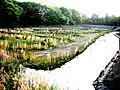 New Pond (新堀) - panoramio.jpg