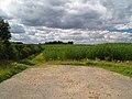 New concessionary walk. - geograph.org.uk - 509054.jpg