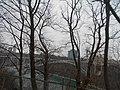 Niagara Falls State Park (15463226314).jpg