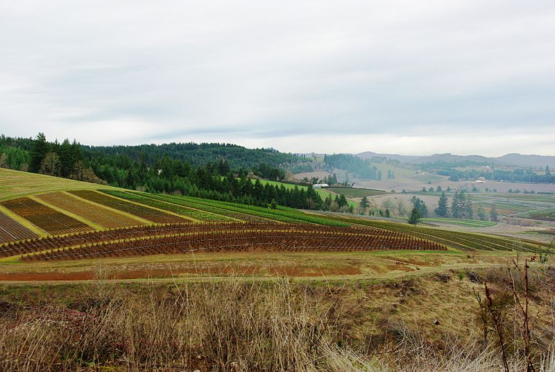 File:Nursery stock in rural Washington County, Oregon.JPG