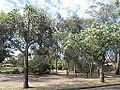 OIC prospect peppermint gums park 1.jpg