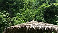 OLD hut.jpg